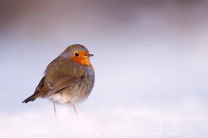 Icecold Robin by thrumyeye