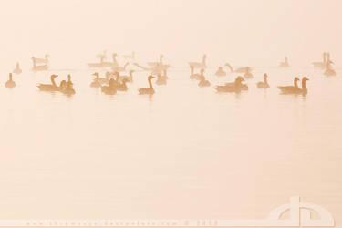 Morning Fog by thrumyeye