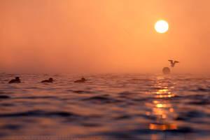 Mist at sunrise by thrumyeye