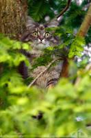 OwlCat by thrumyeye