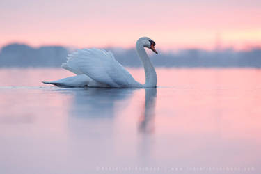 Pretty in Pink by thrumyeye