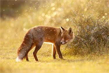 The Fox and The Fairy Dust by thrumyeye