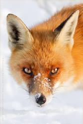 Foxy Lady by thrumyeye