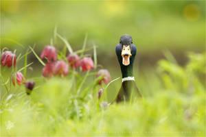 Go Home Duck, You're Drunk by thrumyeye