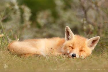 Sleeping Cuty by thrumyeye