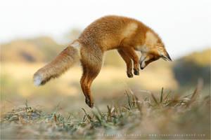 You Say Jump, I Say How High by thrumyeye