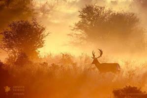 Magical Misty Morning by thrumyeye