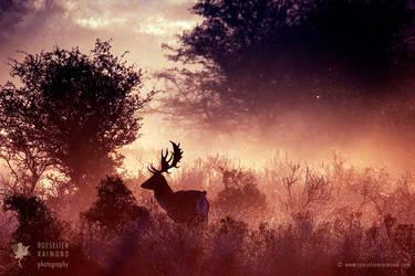 Deer-O-Deer by thrumyeye