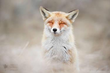 Happy is Fox is Happy by thrumyeye
