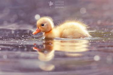 Cute Power - Yellow Duckling by thrumyeye
