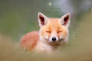 Zen Fox Kit by thrumyeye