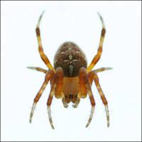 Come in my Web.... by thrumyeye