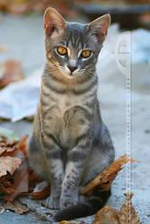 AutumnCat II by thrumyeye