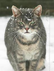 SnowCat.... by thrumyeye