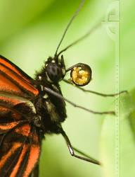 The Pollen Collector II by thrumyeye