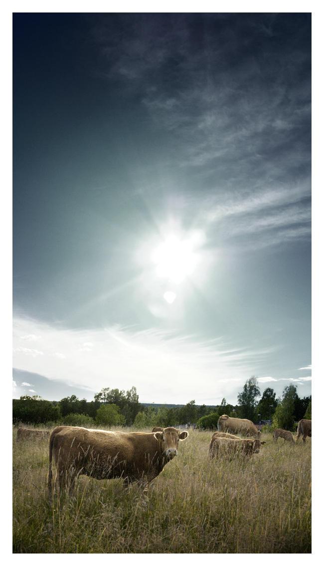 Cow by DiGiTALMAGiC