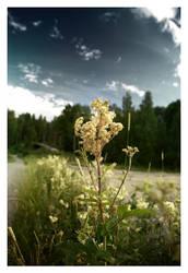 Florish by DiGiTALMAGiC