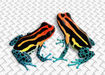 Poison Frogs Ranitomeya Uakarii by FauxHead