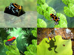 Poison Frogs by FauxHead