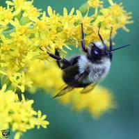 Garden Bee by FauxHead