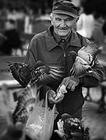 Bird Feeder by Dr-Livemore