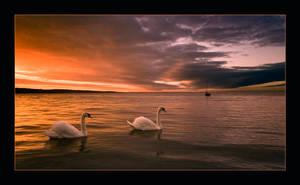 swan lake by arbebuk