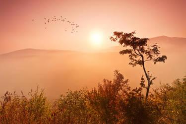 savanna by arbebuk