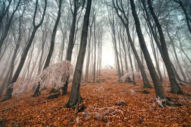 ghost deer by arbebuk