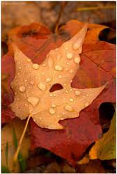 Melancholy Autumn by superkev