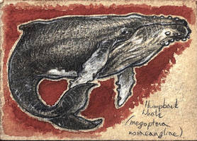 :ACEO: Humpback Whale by CultistCarl