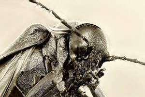 Beetle by Azph