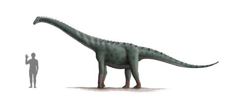 Rinconsaurus Profile: Version 2 by Steveoc86
