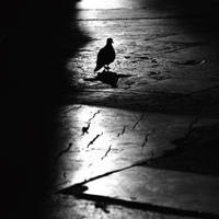 doVe by MustafaDedeogLu