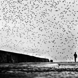 coming home by MustafaDedeogLu