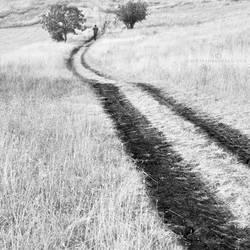 track by MustafaDedeogLu