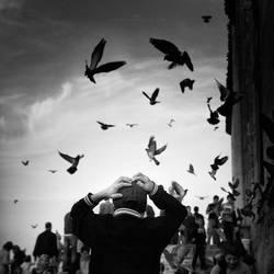 birds by MustafaDedeogLu