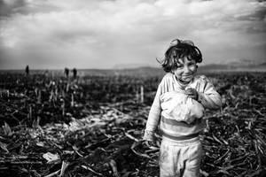 corn by MustafaDedeogLu