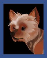 Yorkie Portrait by RunningSpud