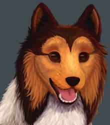 Shetland Sheepdog Portrait by RunningSpud