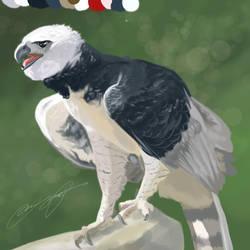 Harpy Eagle Sketch by SunStateGalleries