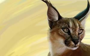 Caracal - African Lynx by boogeybug