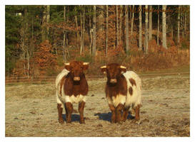 Cows by NaomiNekro