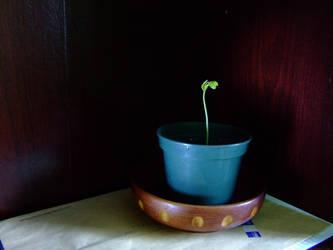 Ma plante de pot et cie by Ritournel