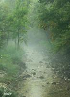 fog after the rain by biba59