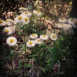 Weeds or flowers? by isthisjackie