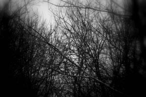 Mystic Snow Scene by Artsyfrog