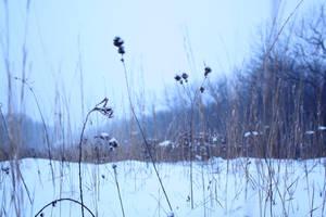 Snowfall Landscape 1 by Artsyfrog
