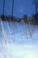 Snowfall Landscape 2 by Artsyfrog