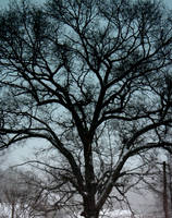 Winter Tree by Artsyfrog