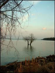 Flooded Tree Beach by effaced